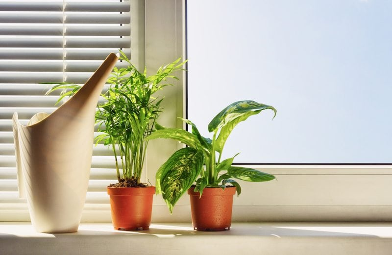 Three plants lined up by a sunny window
