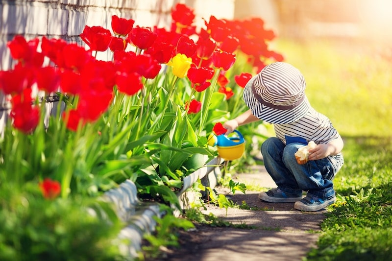 Little child walking near tulips on the flower bed in beautiful spring day. Baby boy outdoors in the garden with watering can. Should you buy air purifiers or air cleaners?